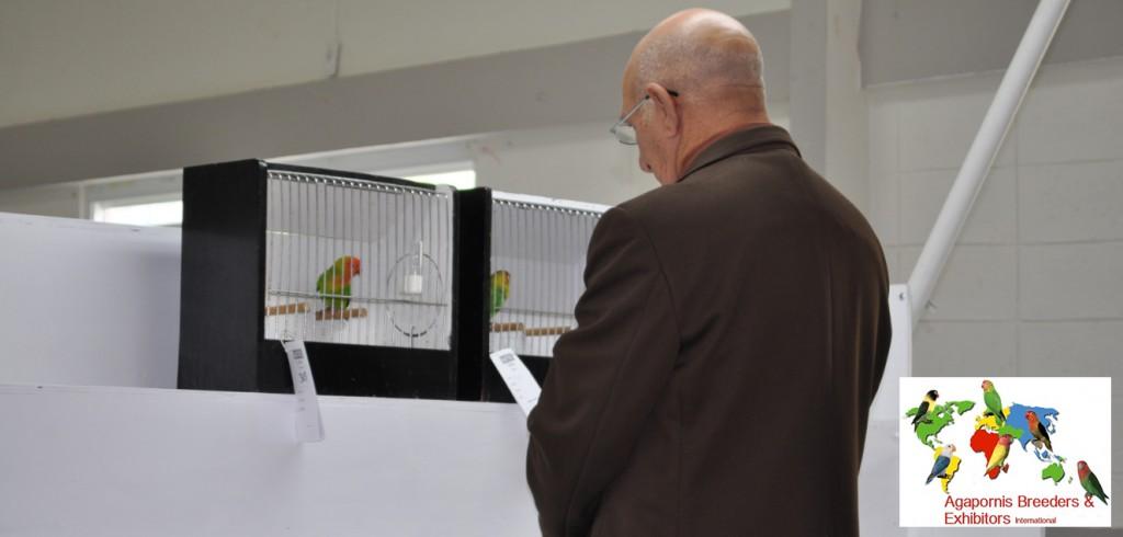 ABE Show Trujillo Alto, Puerto Rico - Jose Ravelo, judge, comparing two birds. Courtesy Gerardo Toledo