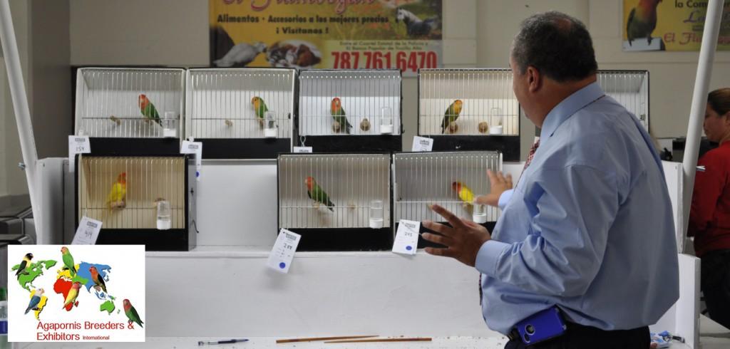 ABE Show Trujillo Alto, Puerto Rico - Luis Ocasio judging. Courtesy Gerado Toledo