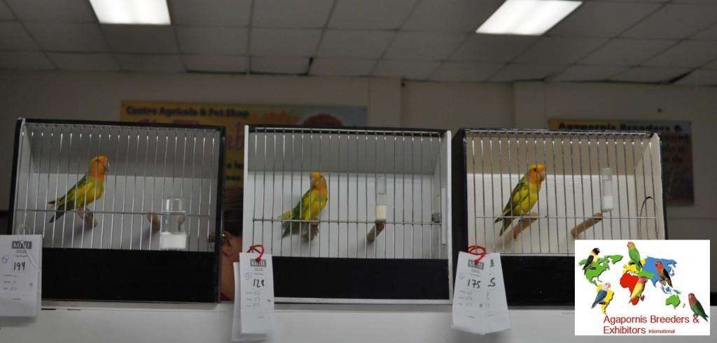ABE Show Trujillo Alto, Puerto Rico - Courtesy Gerardo Toledo