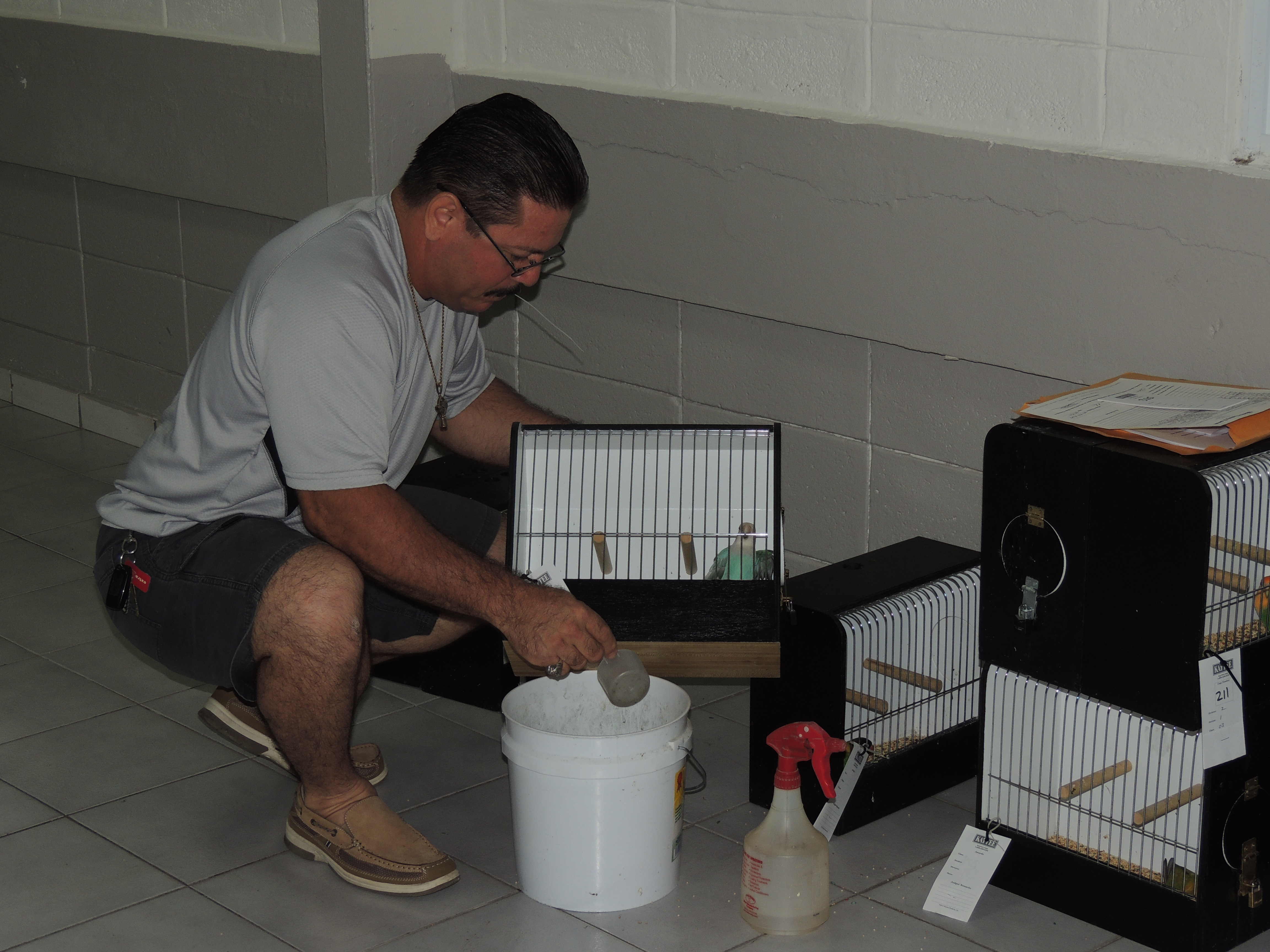 Luis Rivera getting his birds ready. Luis Rivera preparando sus aves. Courtesy Marilena Salmones