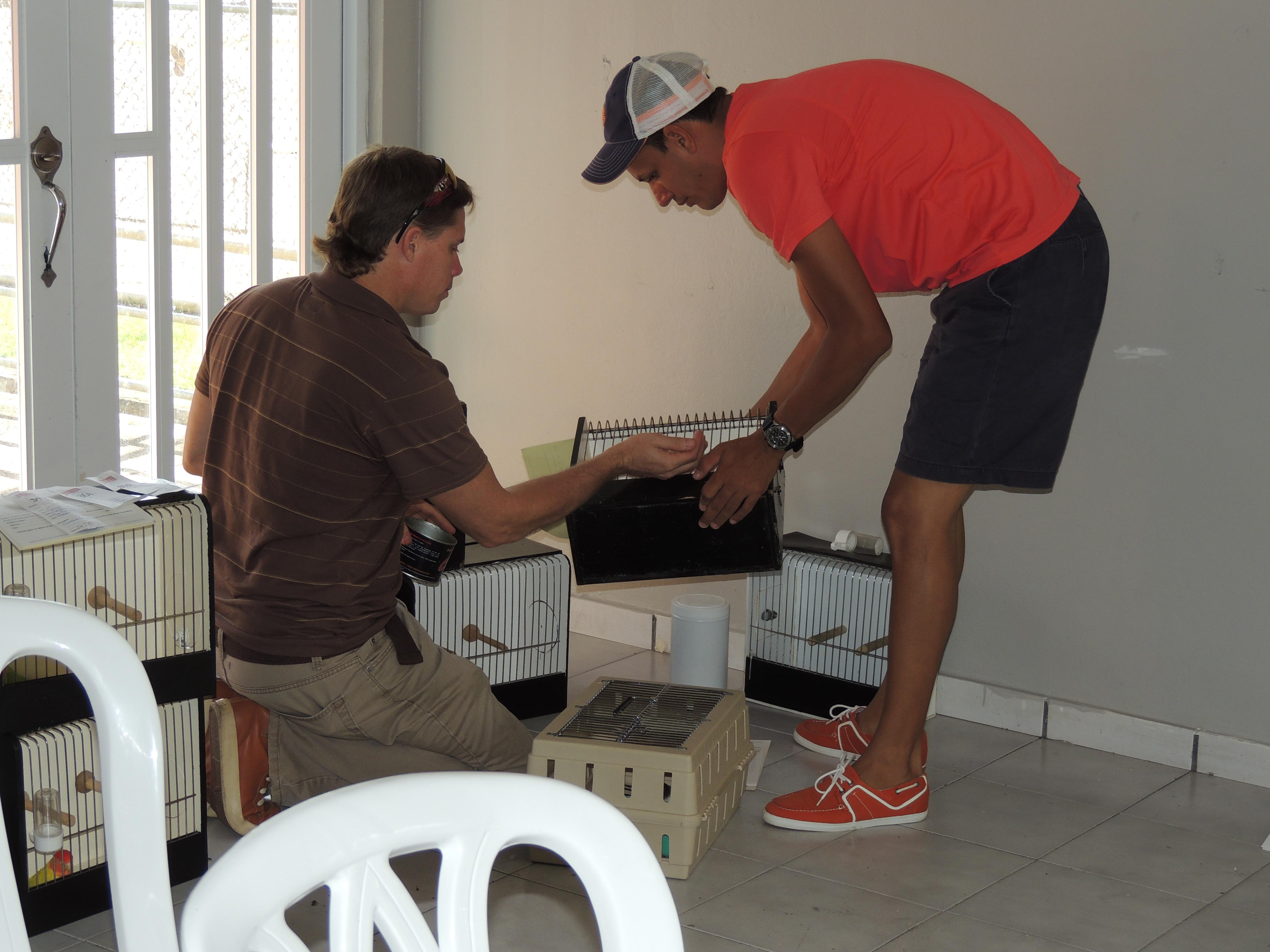 Getting the birds ready. Preparando a las aves. Courtesy Marilena Salmones