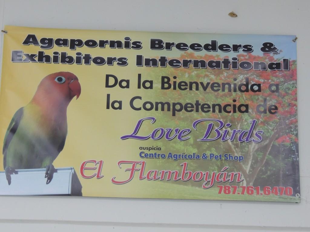 Welcome to the Lovebird Show in Puerto Rico sanctioned by Agapornis Breeders & Exhibitors. Bienvenidos a la competencia de agapornis en Puerto Rico sancionada por Agapornis Breeders & Exhibitors. Courtesy Marilena Salmones