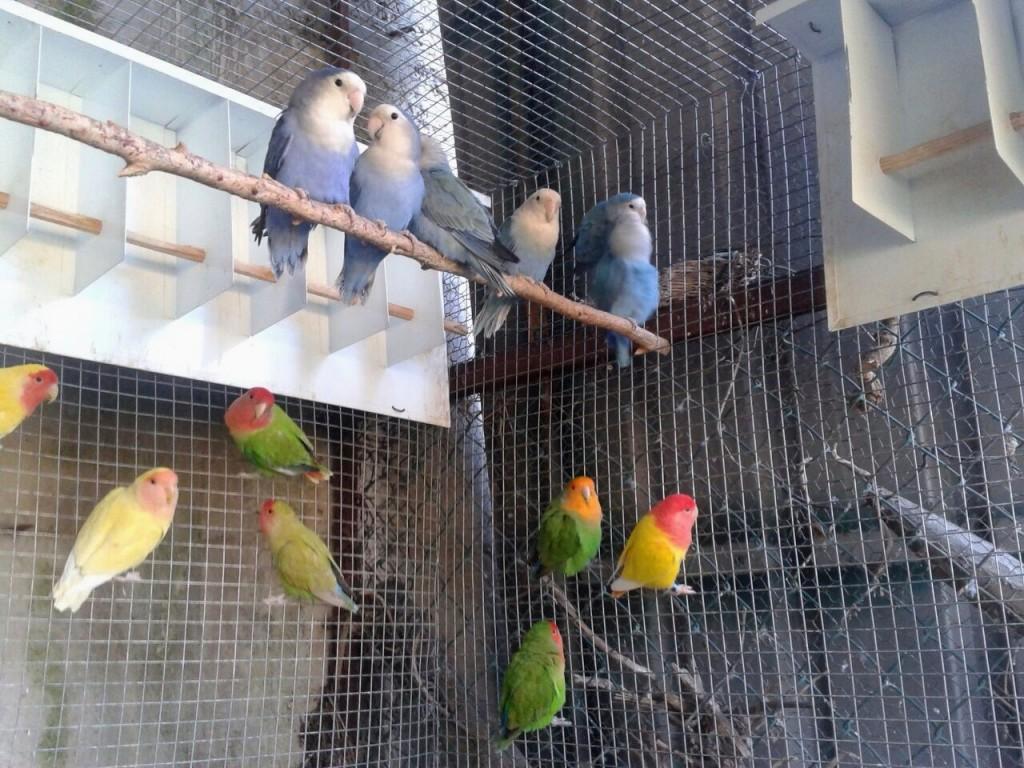 Aviary courtesy Marcio Almeida