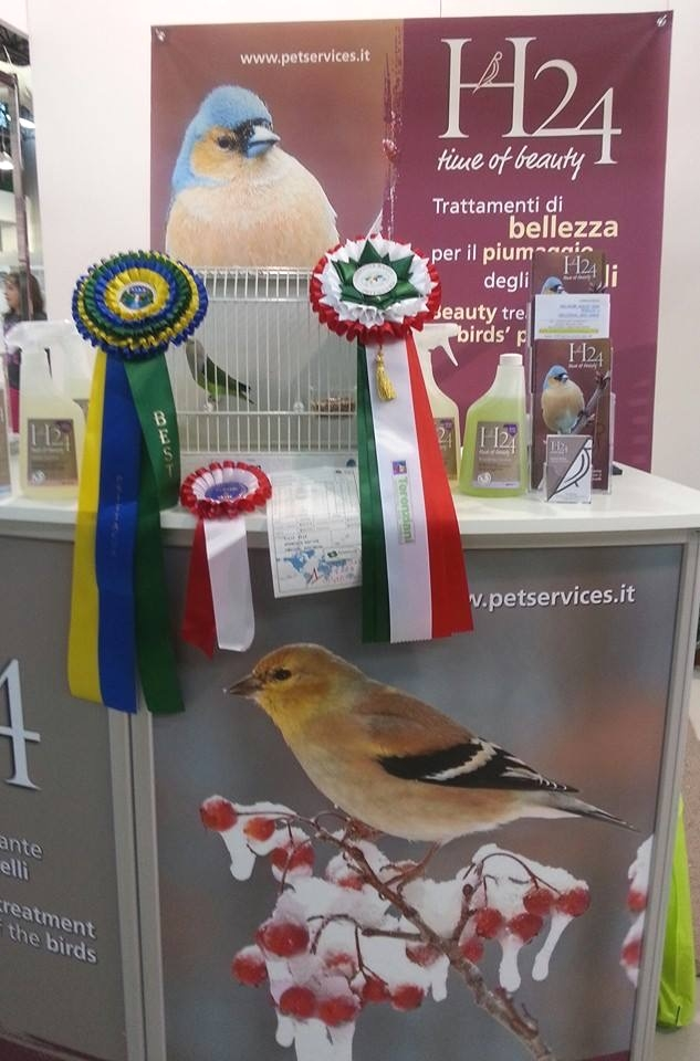 Psittacus Forli Show 2014 - bird owned by Roberto Zuffoli, photo courtesy Roberto Zuffoli. Agapornis Canus - Best in Show 2014