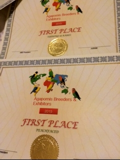 ABE First place custom certificates for Peachfaced Division and Eyerings & Rares Division.