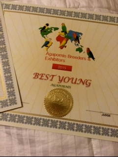 ABE Best Young custom certificate. This is for a bird banded with ABE and it is a bird hatched the same year it is exhibited.