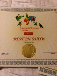 ABE Best in Show custom certificate. ABE judges choose a Best in Show when there is a two Division Show.