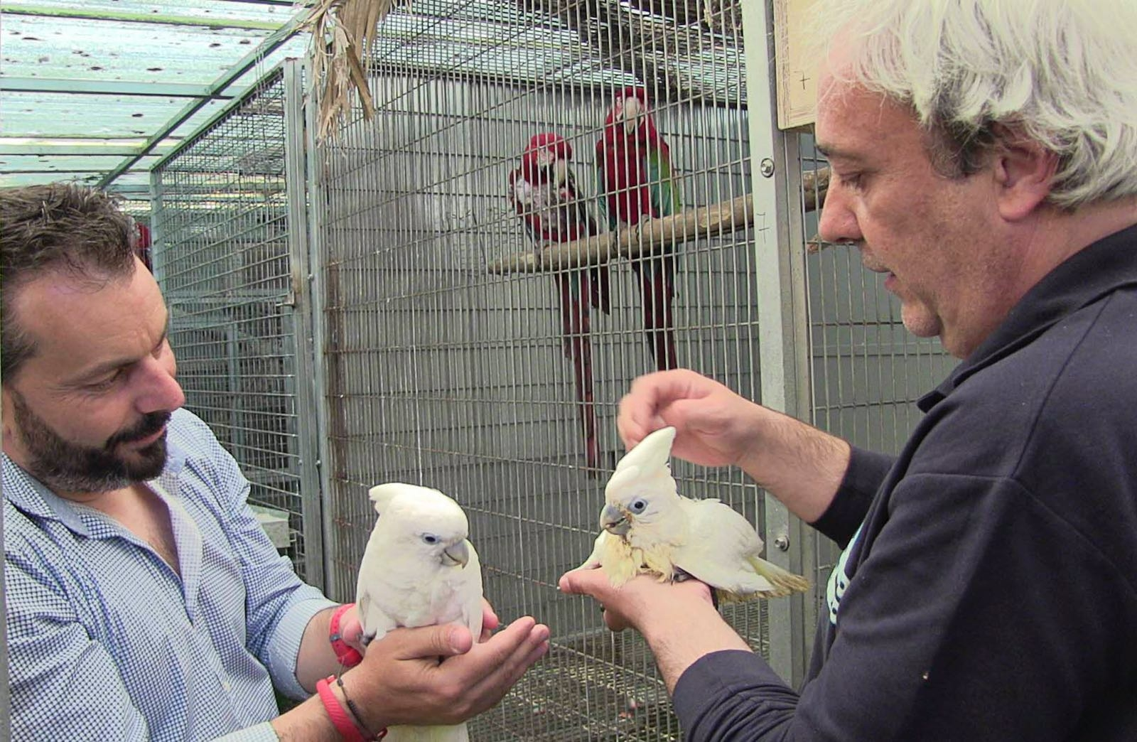 Left to right: Mayor of Gondomar (Galicia, Spain), Javier Penedo (ABE Judge and Secretary for ACAE) and Sinchan the Cockatoo and a sibling.