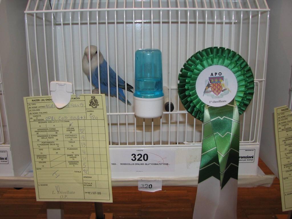 Fabio Baesi Societa Ornitologica Pratese APO 2016